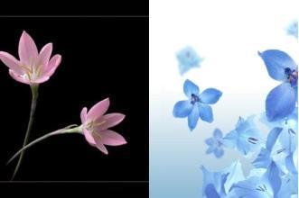 والپیپر موبایل با موضوع گل و طبیعت